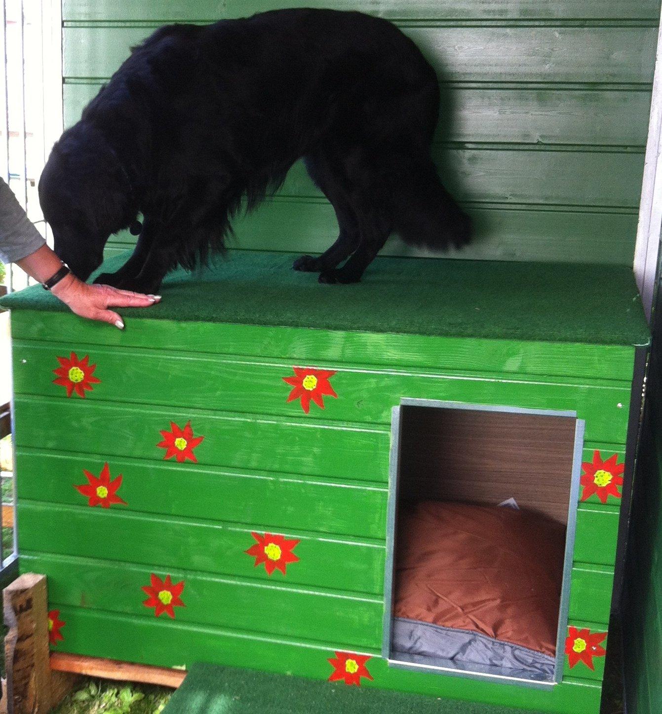 Aislado Caseta especial Serie Medio, tejado plano, entrada en el costado: Amazon.es: Productos para mascotas