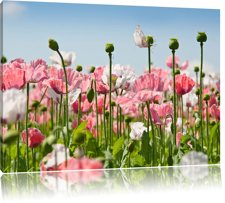 Blumenwiese Englisch amazon de blumenwiese mohnblumen bild auf leinwand riesige