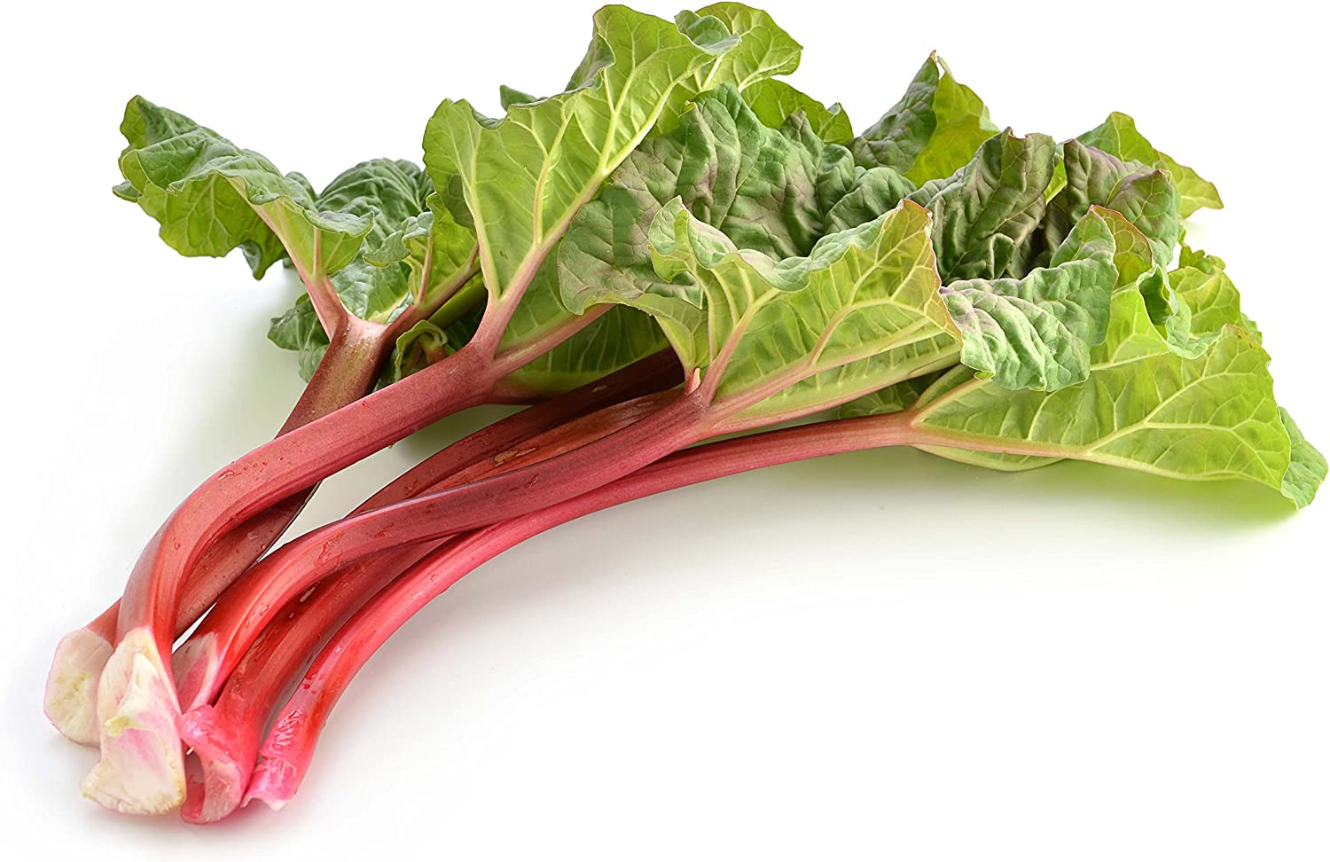 Rhubarb Seeds Vegetable for Planting Giant Non GMO 100 Seeds
