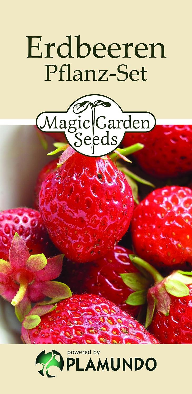 Aussaat-Komplett-Set: 'Erdbeeren-Vertikal', 2 alte Erdbeersorten mit allem notwendigen Zubehör für die Anzucht und den vertikalen Anbau auf Balkon & Terrasse