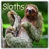 Sloths - Faultiere 2018: Original Avonside-Kalender [Mehrsprachig] [Kalender] (Wall-Kalender)
