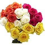 GlobalRose 50 Assorted Color Roses- 2 Beautiful Colors- Express Flower Delivery