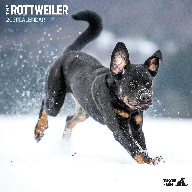 Magnet /& Steel Rottweiler Calendario tradizionale 2021