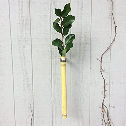 Amazon Bamboo Bud Vase Wall Mounted Handmade