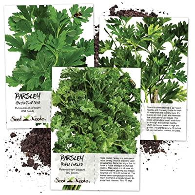 Seed Needs, Parsley Seed Trio (3 Individual Packets) Non-GMO : Garden & Outdoor