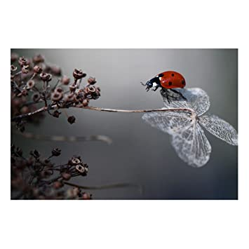 Bilderwelten Pizarra magnética - Ladybug on Hydrangea ...