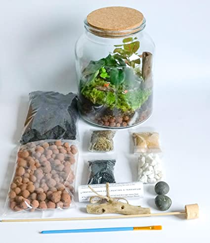 Grow Your Own Handmade Clear Glass Terrarium Kit Open Or Closed With