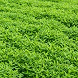Garden Cover Crop Mix Seeds - Blend of Gardening Cover Crop Seeds: Hairy Vetch, Winter Peas, Forage Collards, Winter Rye, Crimson Clover, More (1 Lb Pouch)
