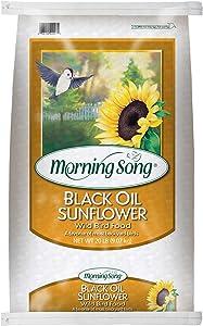 Morning Song 11407 Black Oil Sunflower Wild Bird Food, 20-Pound