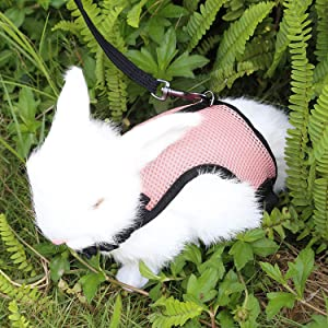 Pettom Bunny Harness with Stretchy Leash