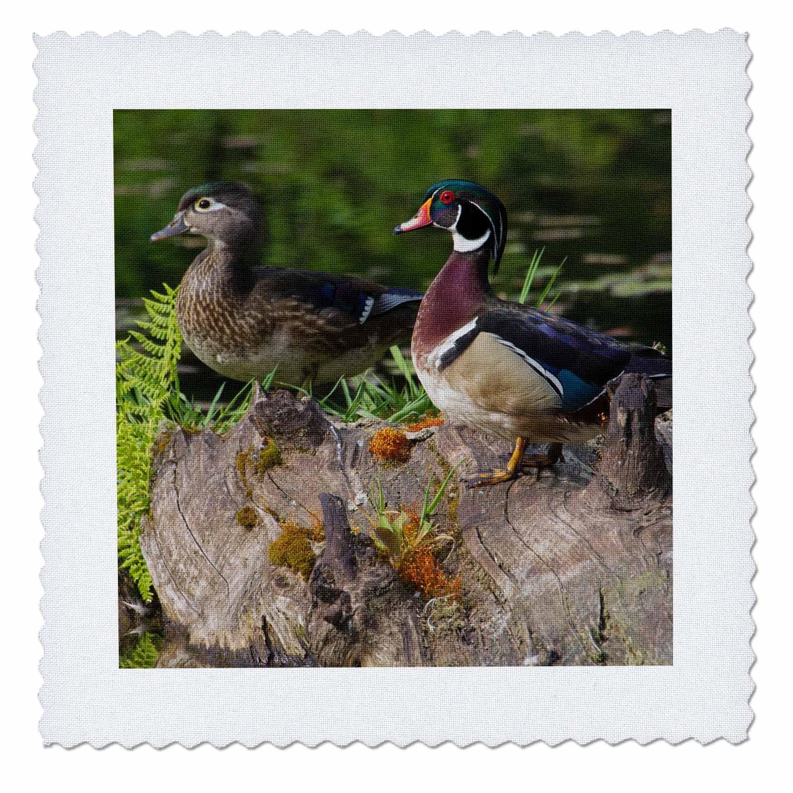 3dRose Danita Delimont - Ducks - Wood Duck Pair - 20x20 inch quilt square (qs_278079_8)