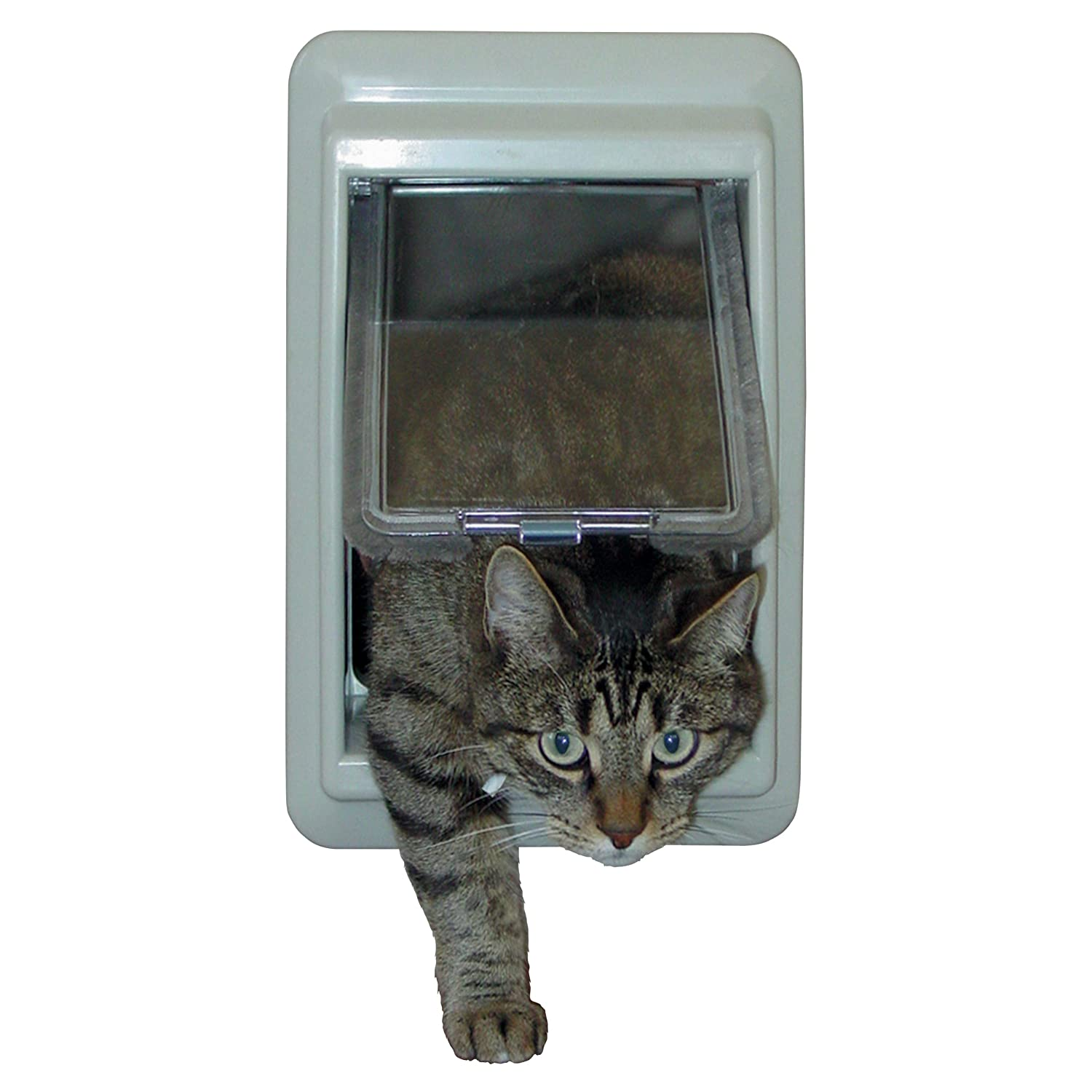 out cat install wooden for keeps glass strays product small magnetic capture doors door