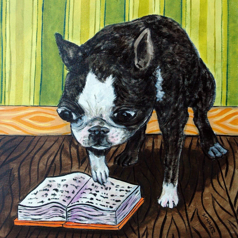 Boston Terrier boston terrier reading giclee art print by schmetzpetz