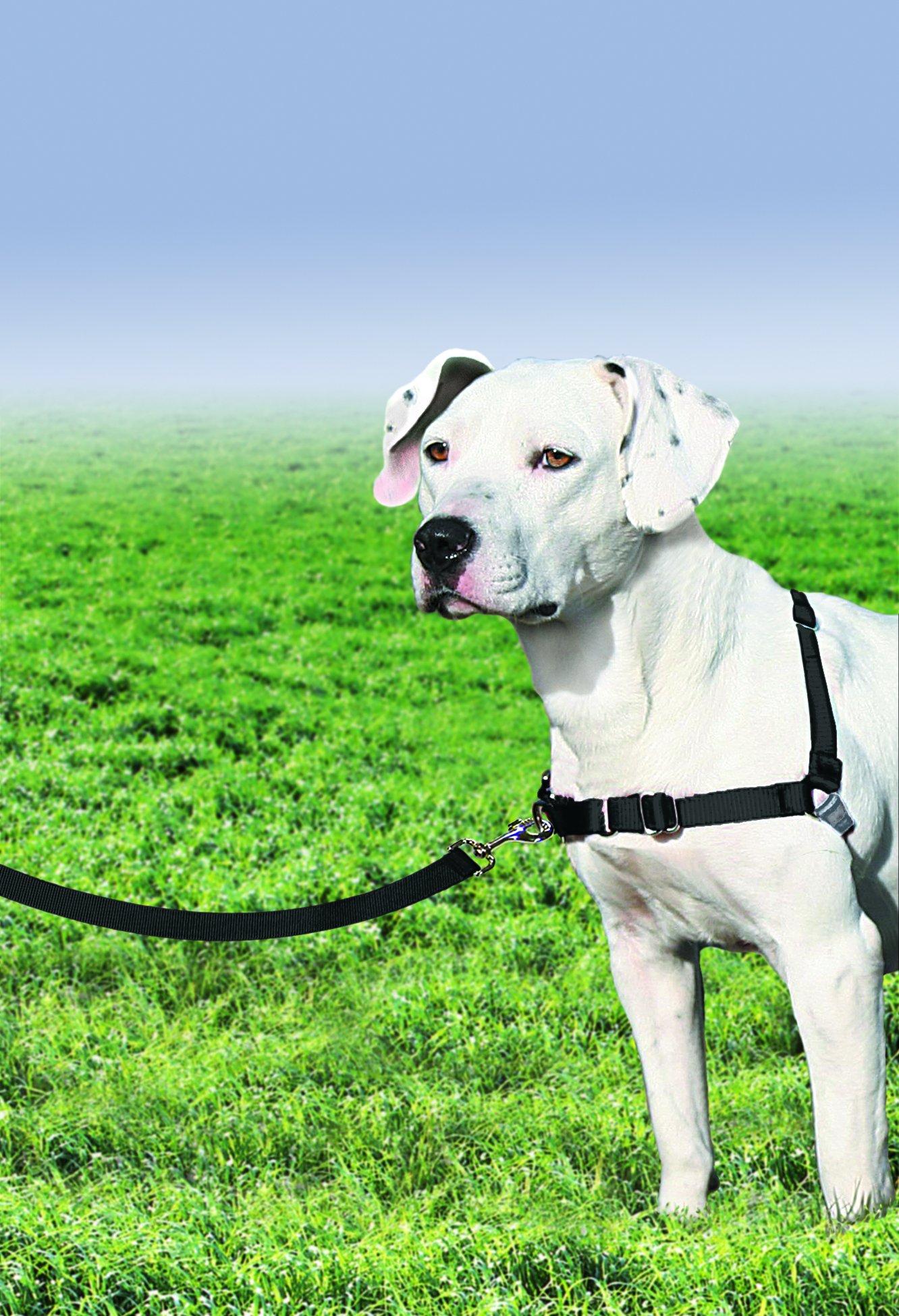 PetSafe Easy Walk Harness, Medium/Large, BLACK/SILVER for Dogs by PetSafe (Image #3)