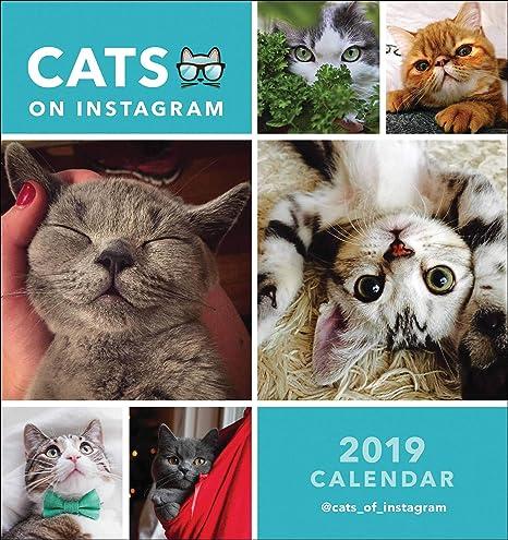 Cats On Instagram - Calendario de escritorio 2019