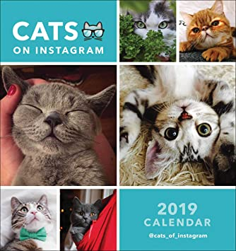 Cats On Instagram Desk Calendar 2019 Amazon Co Uk Office Products