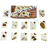 Dancing Bear Fossil Collection Kit (12 pc): Trilobite, Dinosaur Bone, Shark Teeth, Coprolite (fossilized Turtle Poop…