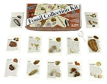 Shark Tooth 12 pcs: Trilobite Fossil Collection Set Coprolit Dinosaur Bone