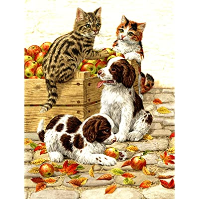 Box of Apples 500 pc Jigsaw Puzzle by SUNSOUT INC: Toys & Games