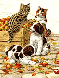 Box of Apples 500 pc Jigsaw Puzzle by SUNSOUT INC