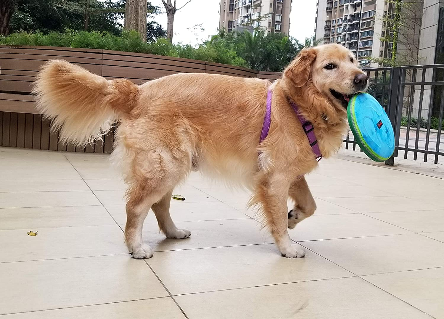 Ring Toss /& 68oz Collapsible Travel Water Bowl Peanuts 3 Piece Flying Disc Chewproof Durable Weatherproof Mr