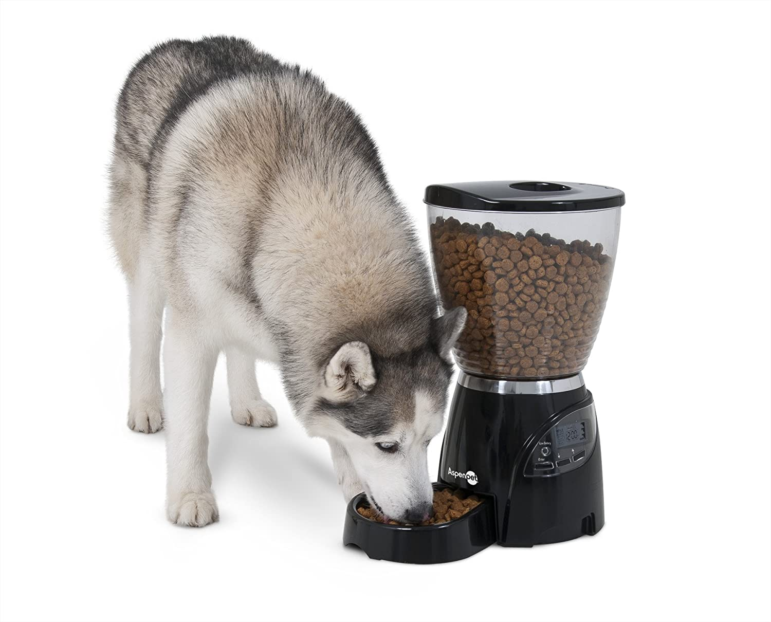 automatic feeders reviews picks for oxgord programmable feeder best dog top pet