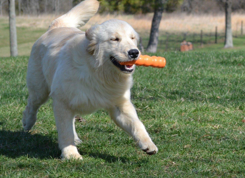 Zigoo Pets - Veggout Dog Tug Toy Green - Large - 7''