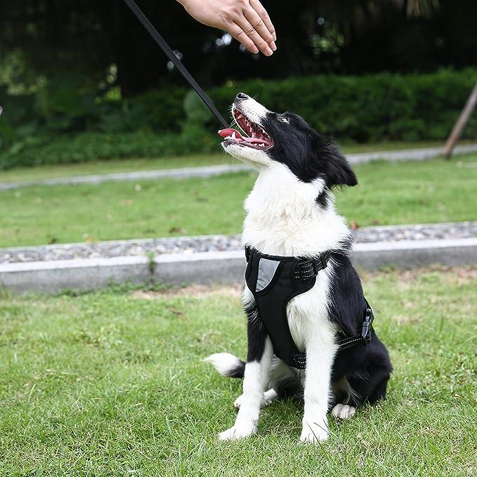 Chaleco arnés anti tirones de Vcalabashor para perros: Amazon.es ...
