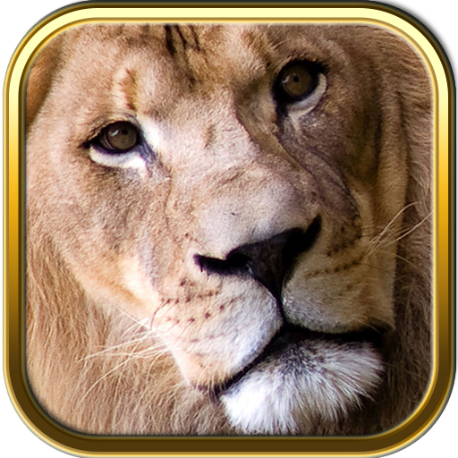 African Animals Safari Jigsaw Puzzle Games