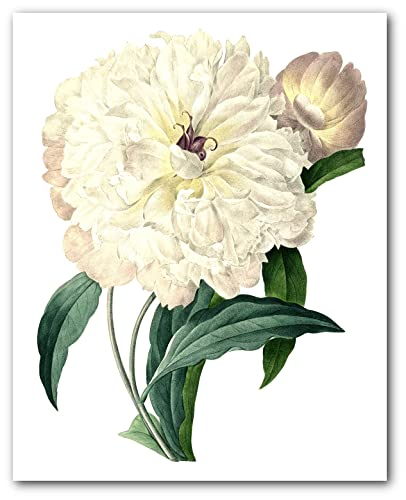 Amazon peonies flower print botanical peony art 8 x 10 inches peonies flower print botanical peony art 8 x 10 inches unframed mightylinksfo