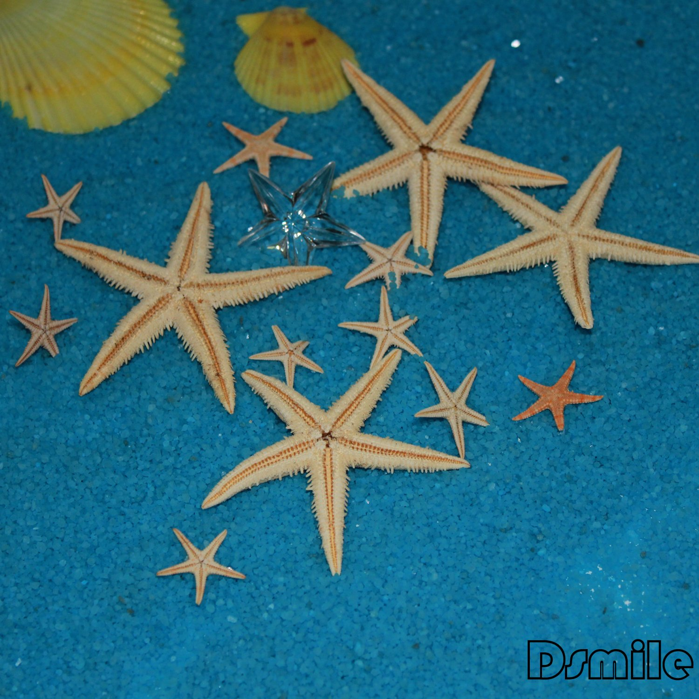 Bulk Starfish Decorations Amazoncom 90 Pcs Small Starfish Star Sea Shell Beach Craft 1 2