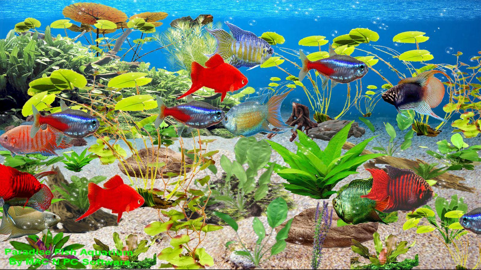 Download aquarium filme kostenlos