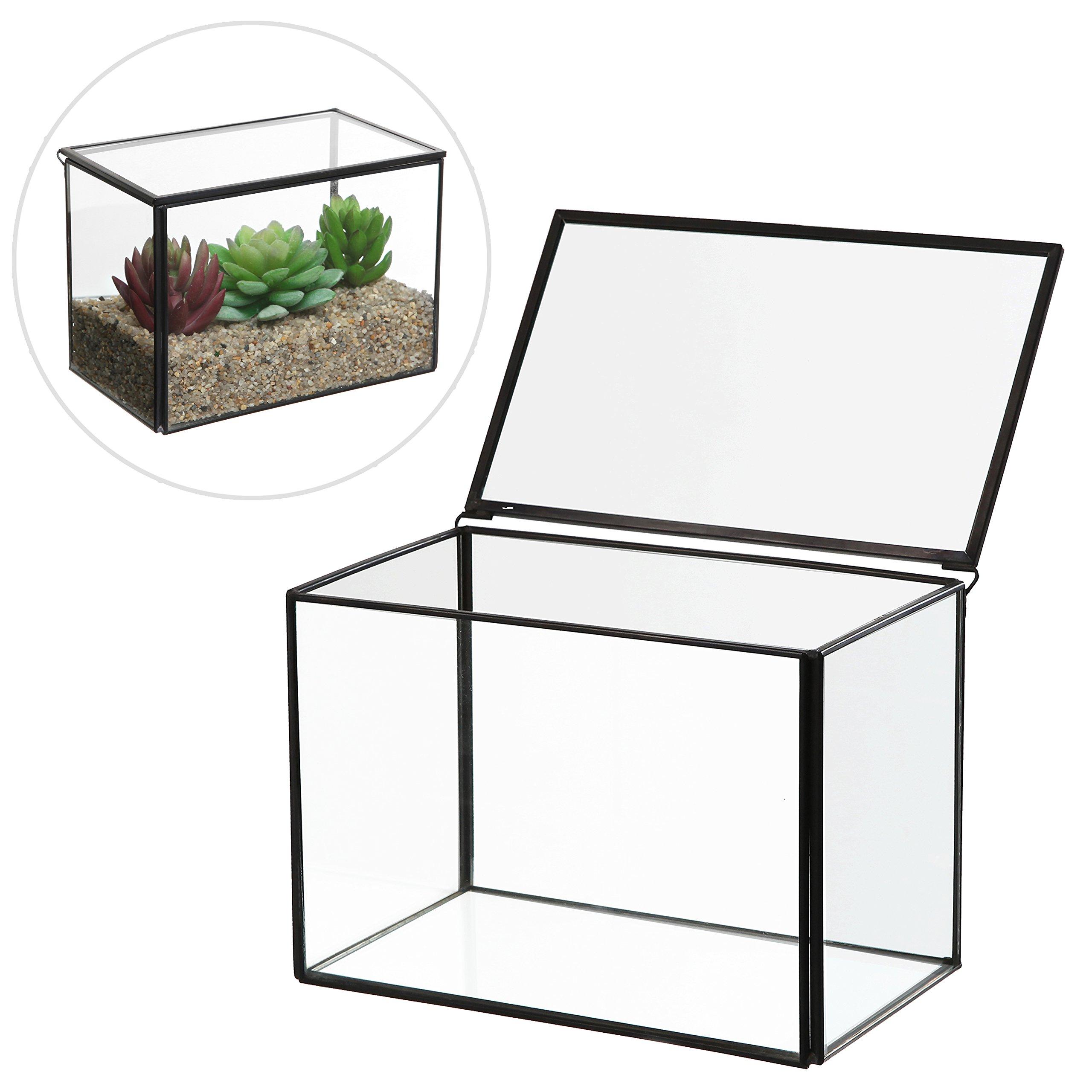 6.5 inch Clear Glass Rectangular Succulent Terrarium Box / Decorative Air Plant Garden Display Case by MyGift