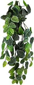 Pangea Hanging Bush, 24 in