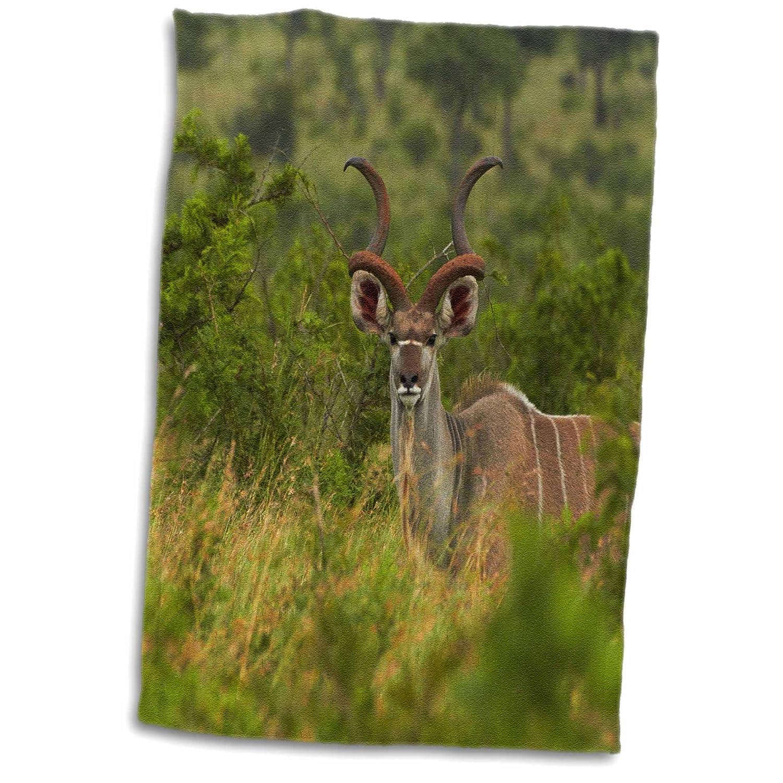 3D Rose Greater kudu Tragelaphus strepsiceros Kruger NP South Africa TWL_187823_1 Towel 15' x 22'