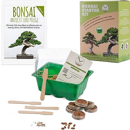 Indoor Windowsill Gardening Gift Set Grow Your Own Olive Bonsai Tree Kit