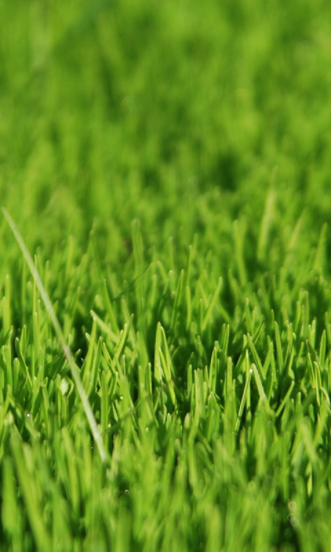 amazon com green grass live wallpaper appstore for android amazon com green grass live wallpaper