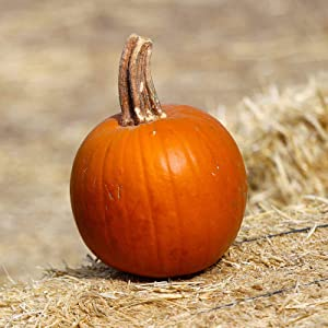 Pumpkin Garden Seeds - Thumpkin - 4 Oz - Non-GMO, Vegetable Gardening Seeds
