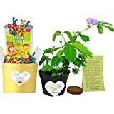 TickleMe Plant Birthday Gift Box Set - Great Unique Gift to Grow This Fun House Plant That Closes Its Leaves When You Tickle It or Blow It a Kiss! It Even Flowers! Perfect for Nature Lovers!