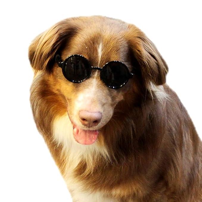 Amazon.com: G001 Gafas de sol redondas para perro, tamaño ...