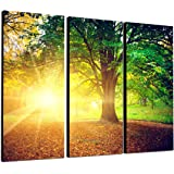 TOPSELLER Wandbilder (green light 3x40x80 cm) Gesamt 130x80 cm Wald grün Weg Sonnenstrahlen Bilder fertig gerahmt auf Keilrahmen xxl. Kunstdruck auf Leinwand. Günstig inkl Rahmung