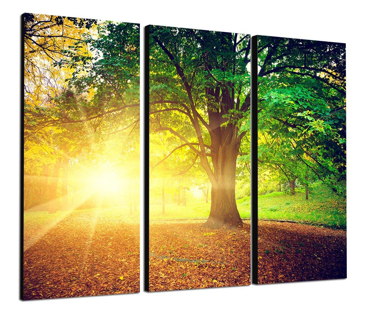 Amazon.de: TOPSELLER Wandbilder (green light 3x40x80 cm) Gesamt ...