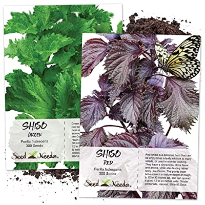 Seed Needs, Shiso Seed Collection (2 Individual Packets) Non-GMO : Garden & Outdoor