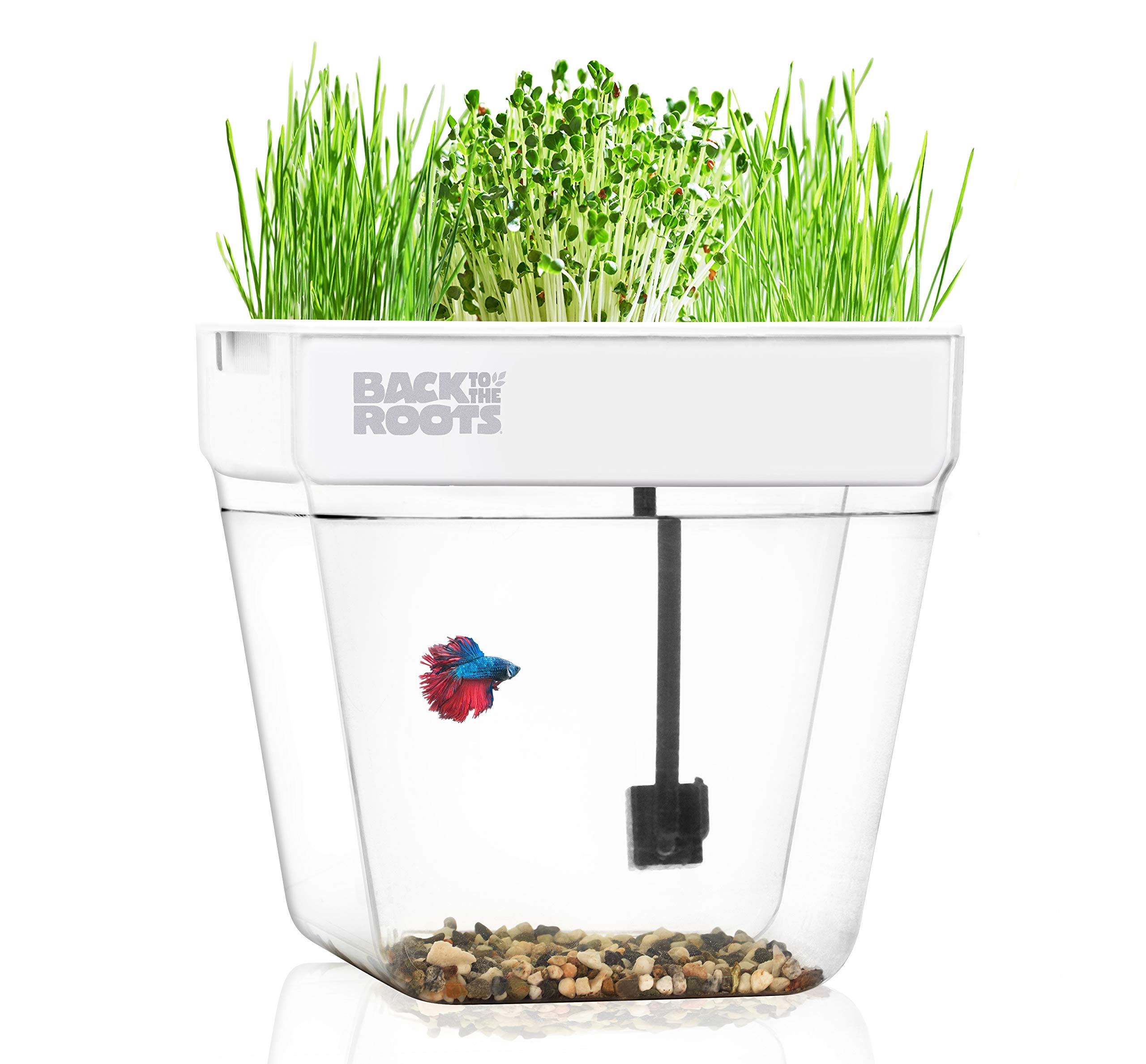 Water Garden, Self-Cleaning Fish Tank That Grows Food, Mini Aquaponic Ecosystem (Great Gardening Gift & Family Project) by Back to the Roots