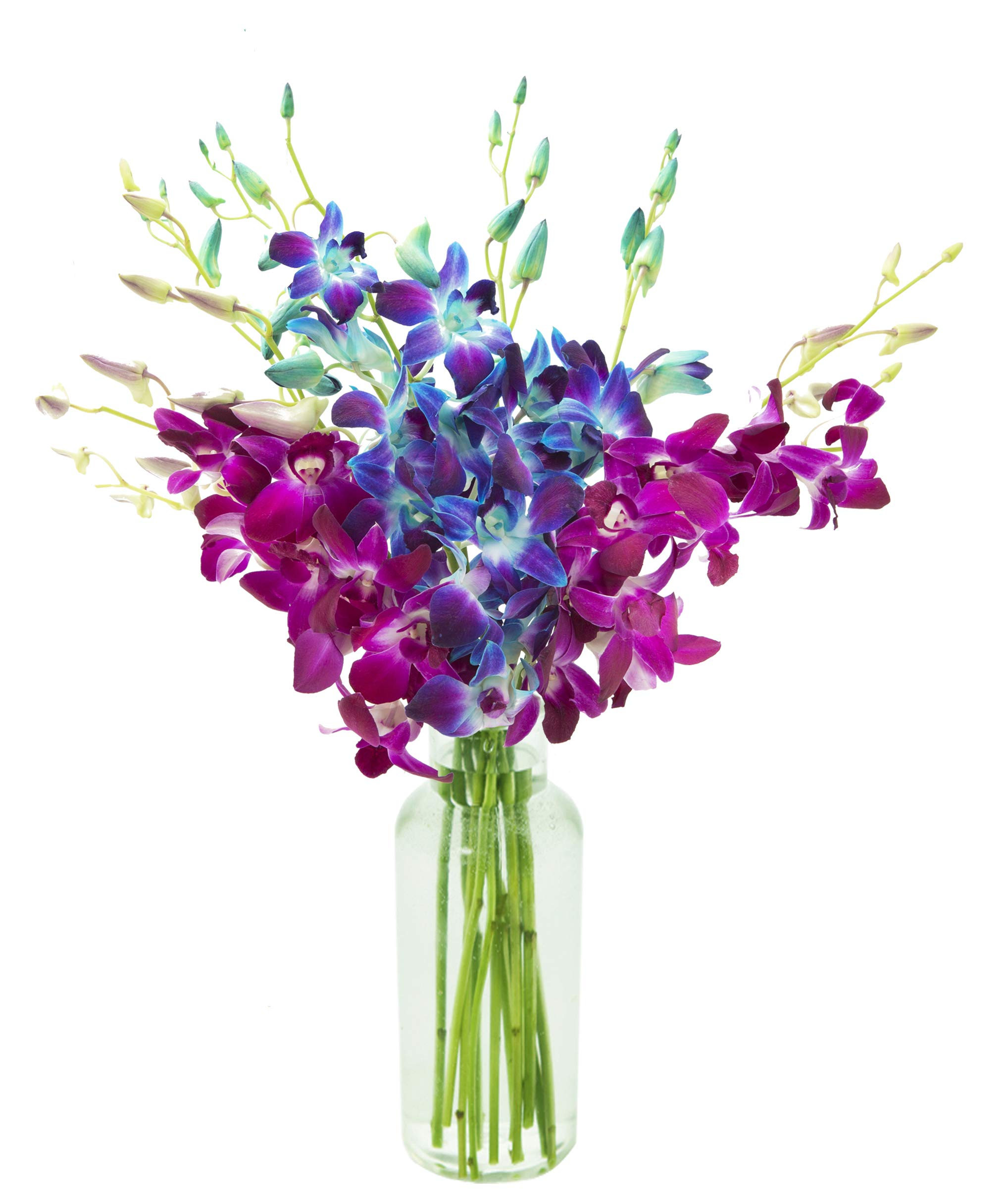 KaBloom Midnight in the Tropics Bouquet of Blue and Purple Orchids from Thailand with Vase