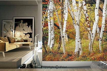 Amazon com: Decorative Privacy Window Film/White Fall Birch Trees