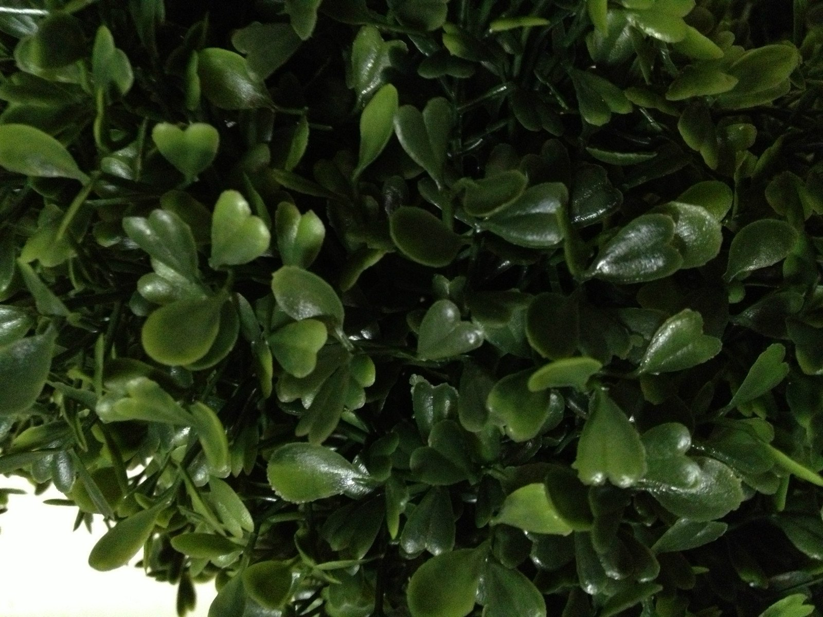 Two 4 Foot 2 Inch Artificial Boxwood Spiral Topiary Trees Potted Indoor or Outdoor by Silk Tree Warehouse (Image #2)