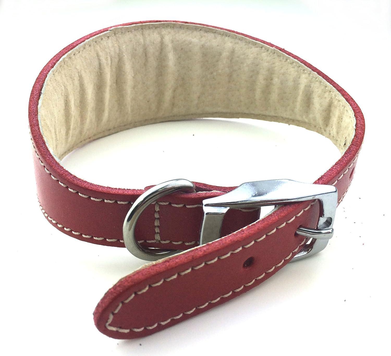 BBD Whippet Collar