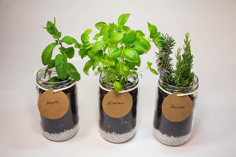 Kit de plantas para huerto urbano. Semillas: menta, albahaca y romero