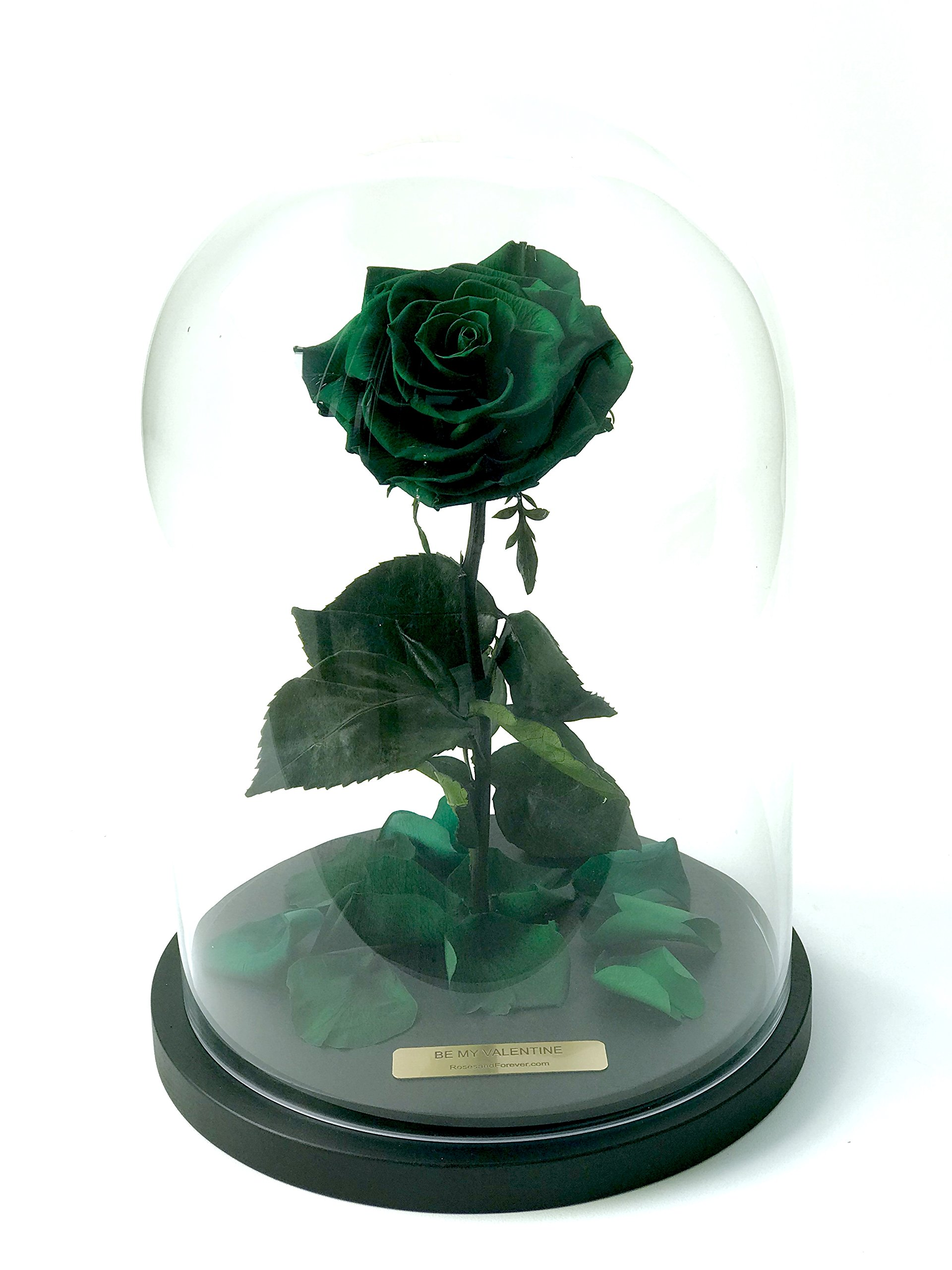 Bella Rose (Forest Green) Fresh Cut Preserved Rose in Glass Cloche. SHE WILL LOVE IT - World's Longest Lasting Roses